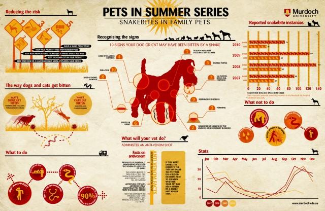 infographic, pet